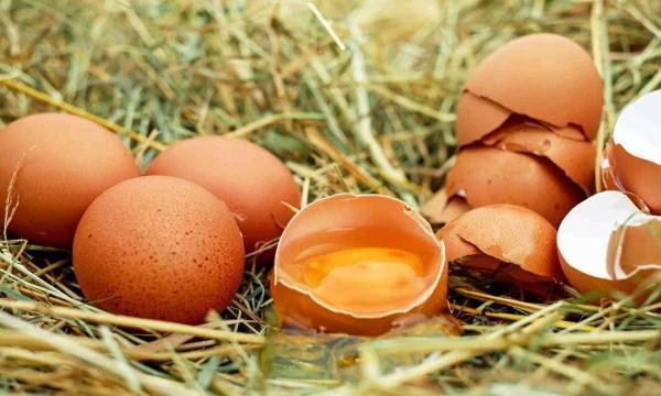 تفسير رؤية البيض في المنام للعزباء للمتزوجة للحامل